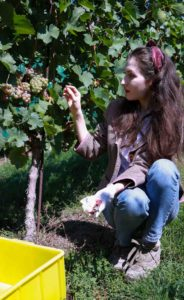 Fashion Blogger Veronika Lipar of Brunette from Wall Street eating grapes at the grape harvest dressed in retro printed tweed blazer, blue mom jeans, bobby sneaker, head scarf, gloves