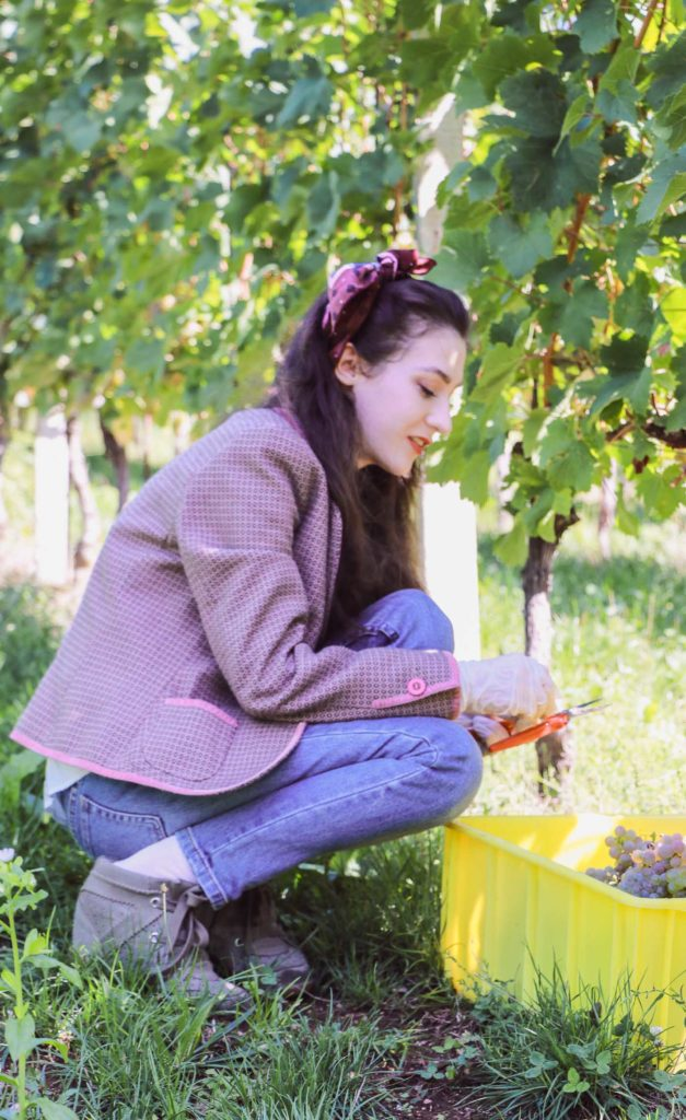 Fashion Blogger Veronika Lipar of Brunette from Wall Street picking grapes in vineyard wearing retro printed tweed blazer, blue mom jeans, bobby sneaker, head scarf, gloves