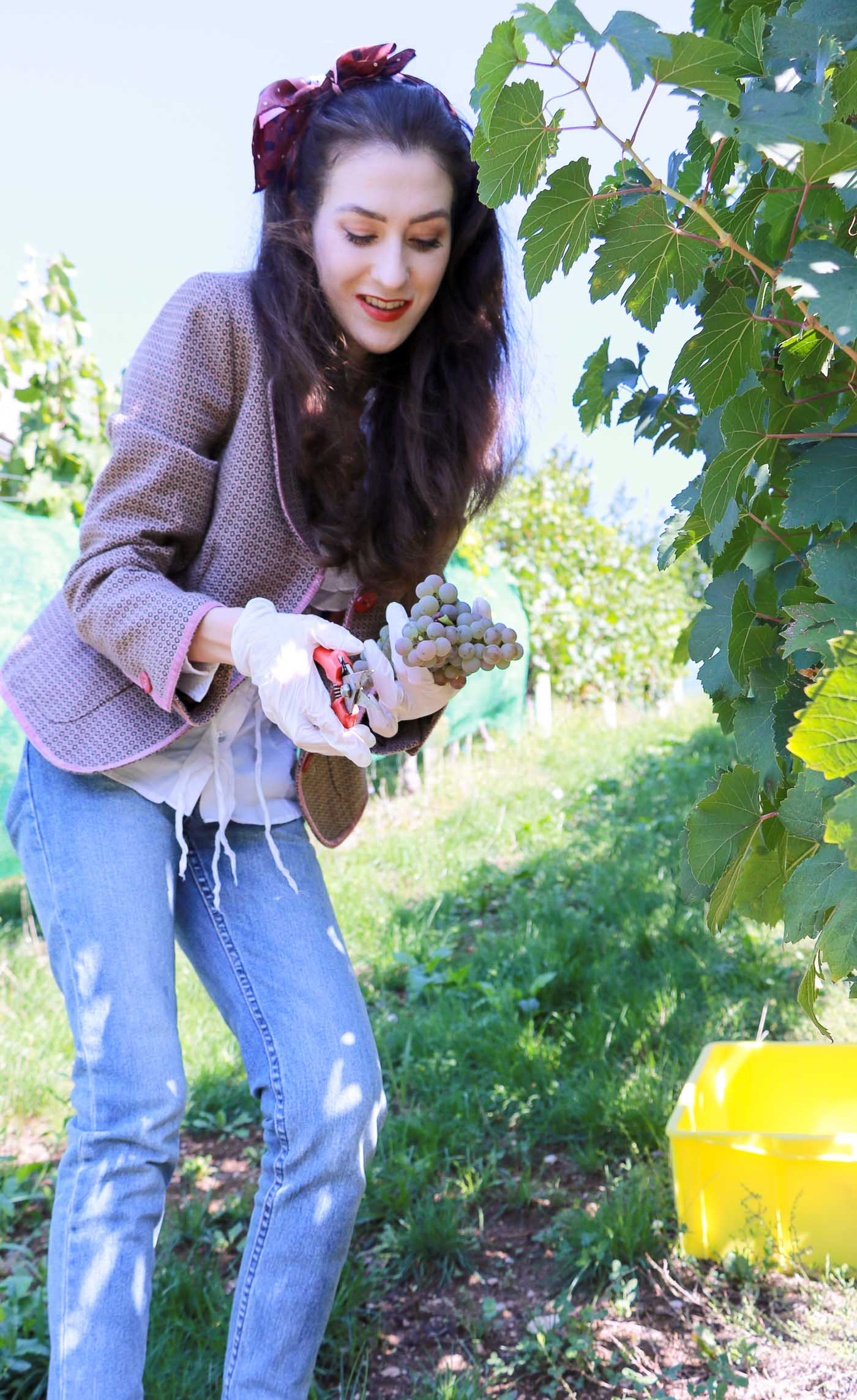 Fashion Blogger Veronika Lipar of Brunette from Wall Street picking grapes at the grape harvest dressed in retro printed tweed blazer, blue mom jeans, bobby sneaker, head scarf, gloves
